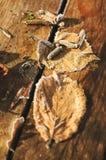 As folhas desvaneceram-se em placas de madeira Fotografia de Stock