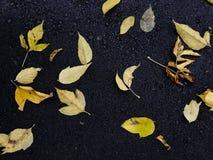 As folhas do amarelo da queda encontraram-se em um asfalto escuro Fundo do outono Fotografia de Stock Royalty Free