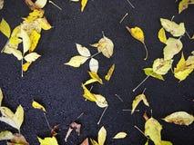 As folhas do amarelo da queda encontraram-se em um asfalto escuro Fundo do outono Foto de Stock