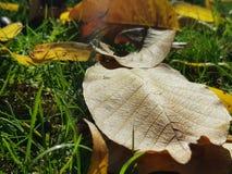 As folhas do amarelo na terra Fotografia de Stock