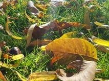 As folhas do amarelo na terra Fotos de Stock Royalty Free