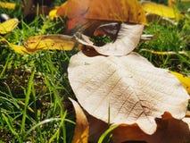 As folhas do amarelo na terra Imagem de Stock Royalty Free