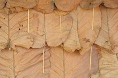 As folhas do teste padrão da parede. Foto de Stock Royalty Free
