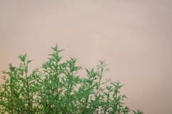 As folhas do verde são naturalmente bonitas foto de stock