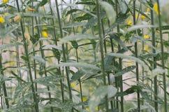 As folhas do verde são folhas verdes são naturalmente bonitas Fotografia de Stock