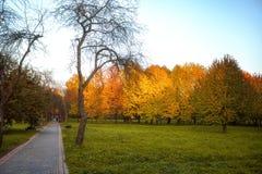 As folhas douradas no ramo, madeira do outono com sol irradiam Fotos de Stock Royalty Free