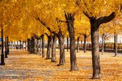 As folhas douradas urbanas arqueiam e atapetam foto de stock