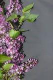 As folhas e as flores lilás com gotas de orvalho refletiram na água Imagem de Stock