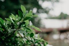 As folhas e o fundo do bokeh são borrados imagens de stock