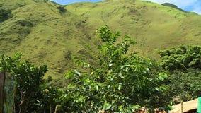 As folhas e um monte verde filme