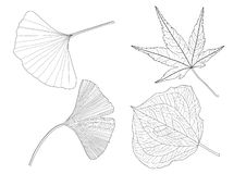 As folhas esqueletais alinharam o preto do projeto e do teste padr?o da folha no fundo branco ilustração royalty free