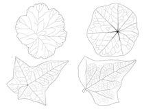 As folhas esqueletais alinharam o projeto e a linha preta no fundo branco ilustração royalty free