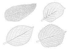 As folhas esqueletais alinharam o projeto e a linha preta ilustração royalty free