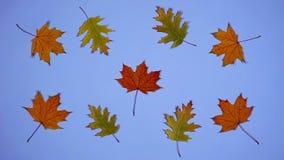 As folhas estão dançando Pare a animação do movimento com folhas de outono em um fundo azul ilustração royalty free
