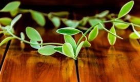 As folhas estão na madeira Fotografia de Stock Royalty Free