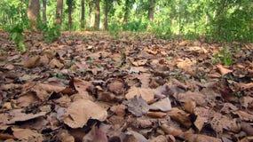 As folhas falled no verão do tempo de Autmn na floresta Imagens de Stock