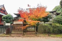 As folhas gerenciem a laranja e o vermelho no outono Foto de Stock