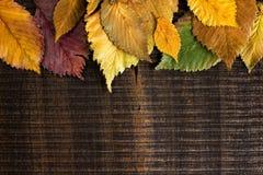 As folhas limitam na madeira escura Fotografia de Stock