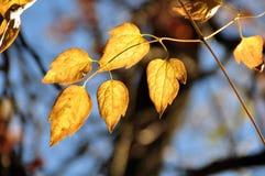 As folhas mudam a cor com a chegada do outono imagem de stock