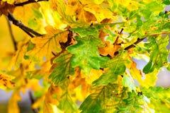 As folhas na árvore Fotografia de Stock Royalty Free