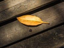 As folhas no assoalho de madeira fotografia de stock royalty free
