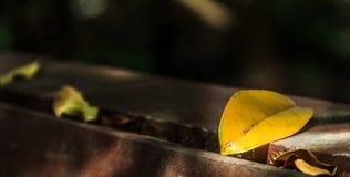 As folhas no assoalho de madeira fotos de stock