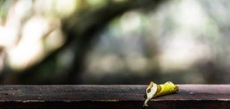 As folhas no assoalho de madeira Imagem de Stock