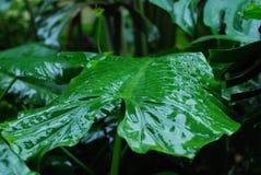 As folhas no jardim Fotografia de Stock Royalty Free