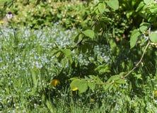 As folhas novas do olmo, um ramo da árvore solar com jovens saem na perspectiva de um jardim borrado na primavera fotos de stock