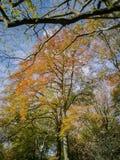 As folhas obtêm uma cor diferente no início do outono fotos de stock royalty free