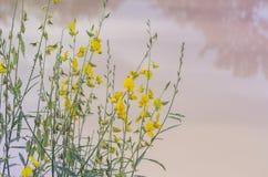As folhas que do amarelo Poo é folhas verdes são naturalmente bonitas fotografia de stock