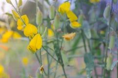 As folhas que do amarelo Poo é folhas verdes são naturalmente bonitas imagens de stock