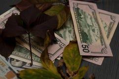 As folhas são dólares Dólares americanos Fotografia de Stock