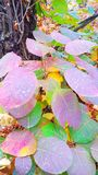 As folhas são muito bonitas fotos de stock