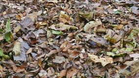 As folhas secam na terra video estoque