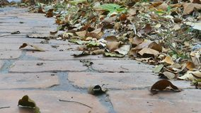 As folhas secam na terra vídeos de arquivo