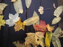 As folhas secas amarelas da queda encontram-se em placas de madeira mais fundo do outono Imagens de Stock Royalty Free