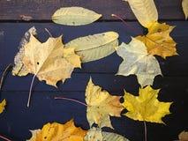 As folhas secas amarelas da queda encontram-se em placas de madeira mais fundo do outono Imagem de Stock