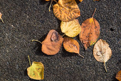 As folhas secas caídas com chuva deixam cair neles fotos de stock