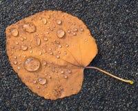 As folhas secas caídas com chuva deixam cair neles imagens de stock royalty free