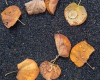 As folhas secas caídas com chuva deixam cair neles fotografia de stock royalty free