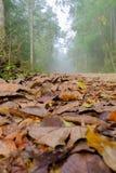 As folhas secas caem para baixo a estrada nevoenta nas madeiras Imagens de Stock