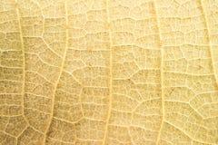 As folhas secas fecham-se acima do fundo no foco obscuro Fotos de Stock Royalty Free