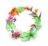 As folhas tropicais, pássaro exótico, orquídea florescem Grinalda floral watercolor ilustração royalty free