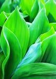 As folhas verde-clara fecham-se acima do fundo art?stico abstrato, contexto macro da folha fresca, teste padr?o floral bot?nico,  foto de stock
