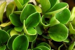 As folhas verdes grossas naturais fecham-se acima da opinião do pássaro imagem de stock