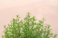 As folhas verdes são verde naturalmente bonito foto de stock royalty free