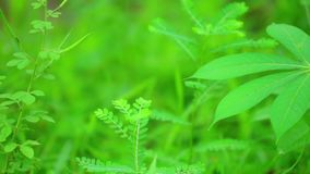 As folhas verdes vibrantes da vegetação da planta tropical fecham-se acima video estoque