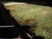 As formigas Imagem de Stock