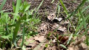 As formigas no formigueiro após a hibernação vivem seus casos vídeos de arquivo